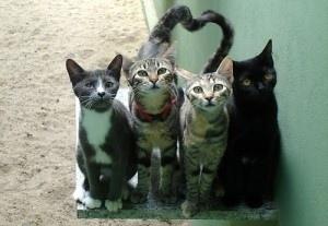 Colonie feline, incontro pubblico il 26 febbraio per raccogliere proposte e formulare azioni