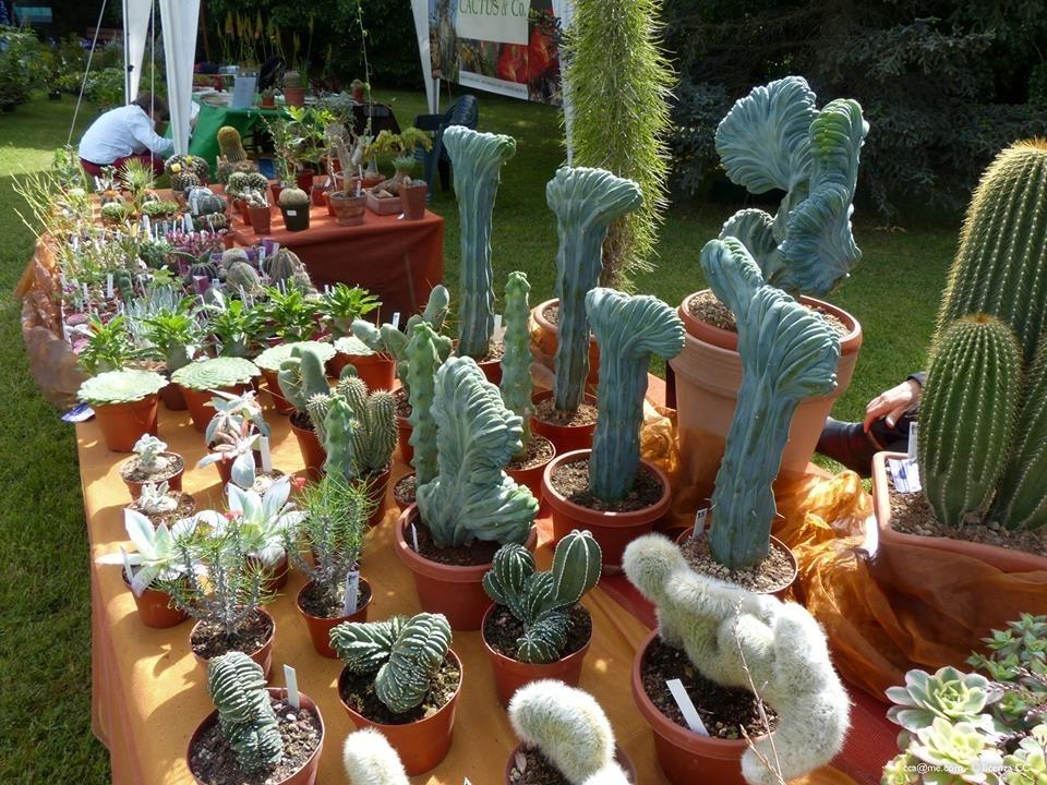 Hortus mostra mercato di piante rare all 39 orto botanico for Piante rare