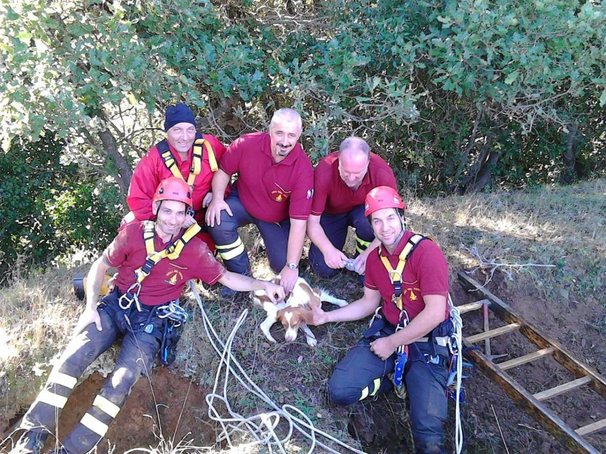 Cane da caccia caduto in un burrone salvato dai Vigili del fuoco di Viterbo