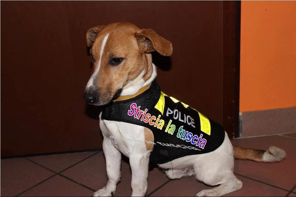 Vetralla, se adotti un cane non paghi la Tari, polemiche sull'iniziativa del Comune
