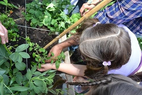 """""""Con i piedi per terra"""" così i bambini apprendono l'amore per i campi e i loro frutti"""