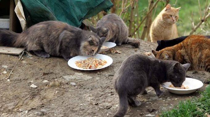 La bufala dello sterminio dei gatti della colonia viterbese di Prato giardino