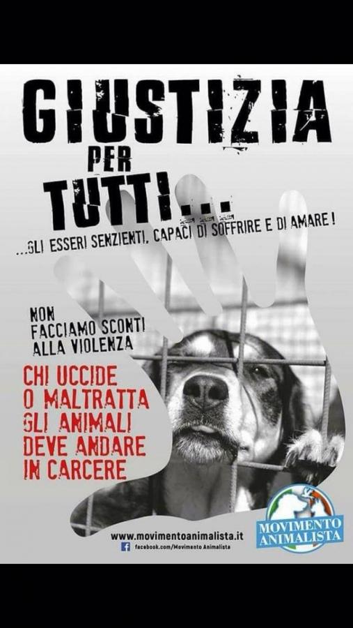Cane ucciso a fucilate a Vallerano, Movimento animalista Viterbo: «Ricompensa a chi parla»