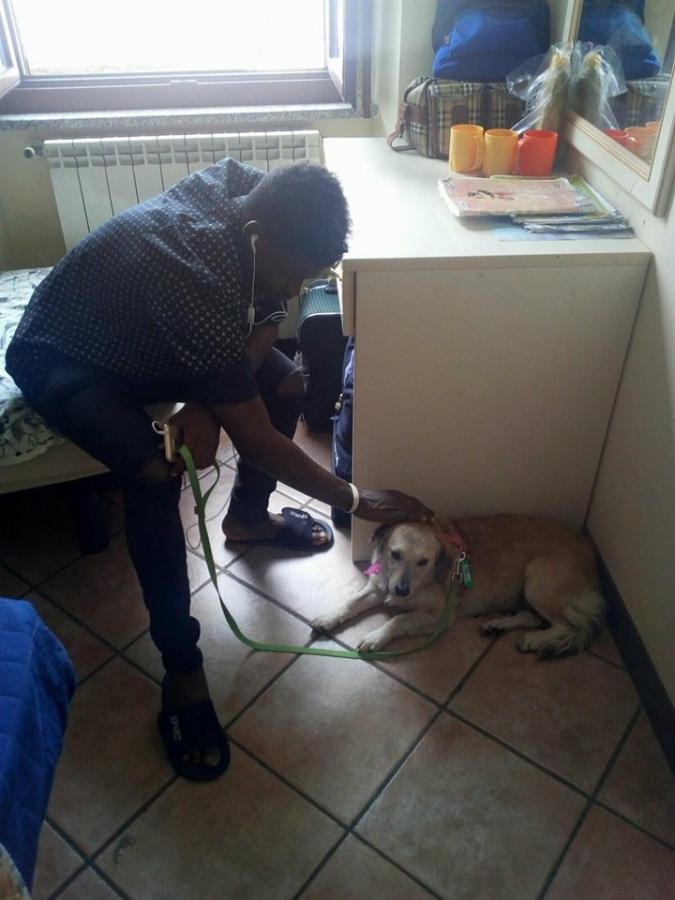 """""""Bimba Camp"""": da cane abbandonato a pet terapy per giovani immigrati"""