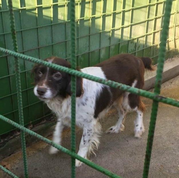 #adottaunnonnino, continua la campagna adozioni di cani anziani promossa da Reteluna