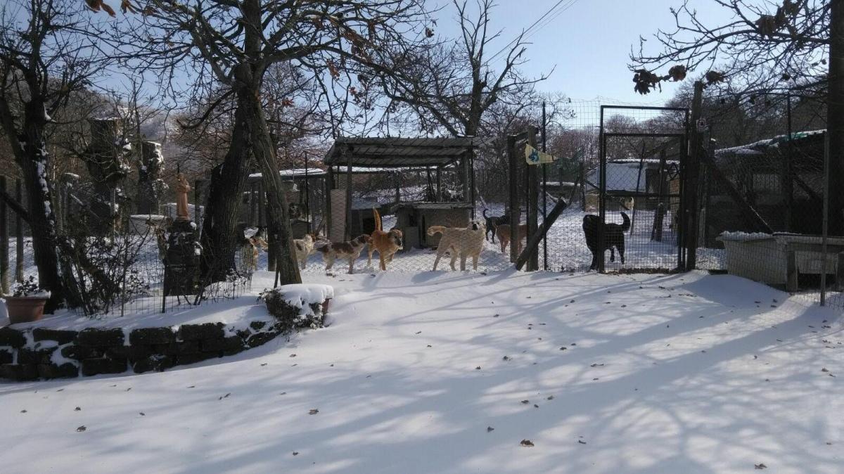 I Cani Di Bagnaia Nella Neve, Stanno Tutti Bene. «