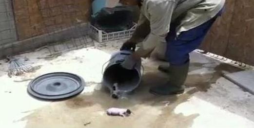 Cuccioli affogati, condannati a sei mesi gli ex gestori del canile Fontana
