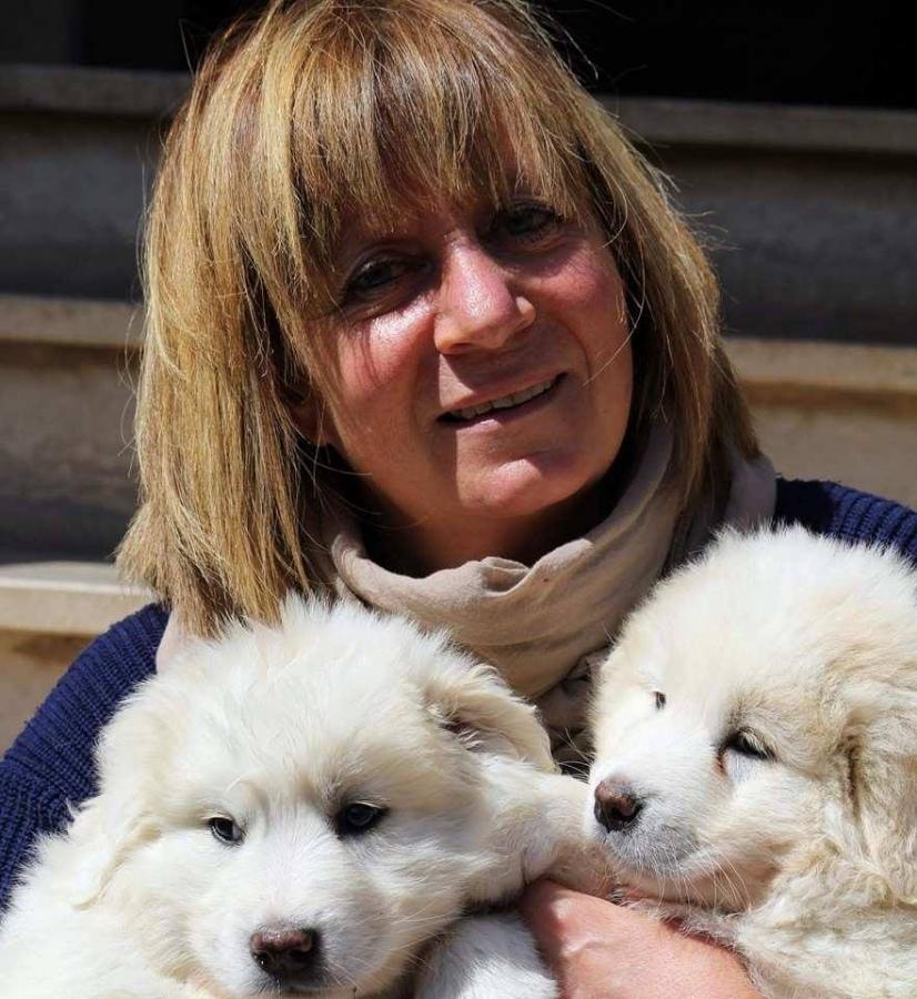 Tuscania, cani sfrattati: «I soldi per il canile ci sono ma il Comune ha bloccato tutto»