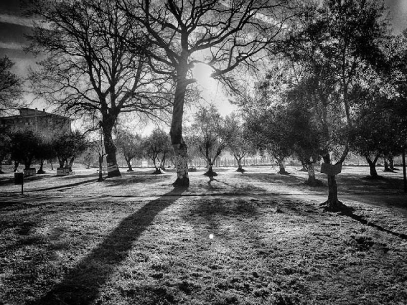 Parco delle querce il gruppo santa barbara scrive al for Alberi simili alle querce
