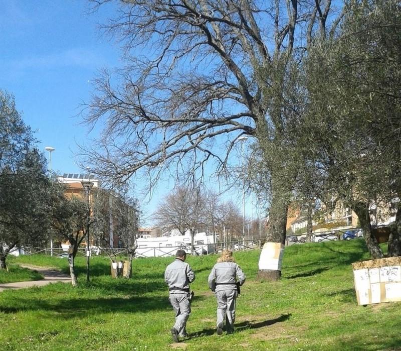 Censimento degli alberi monumentali pubblicato l 39 avviso for Alberi simili alle querce